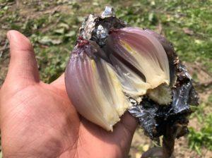 玉ねぎのアルミホイル焼き